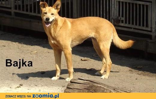 Żywiołowe psie rodzeństwo szuka opiekunów!,  dolnośląskie Wrocław