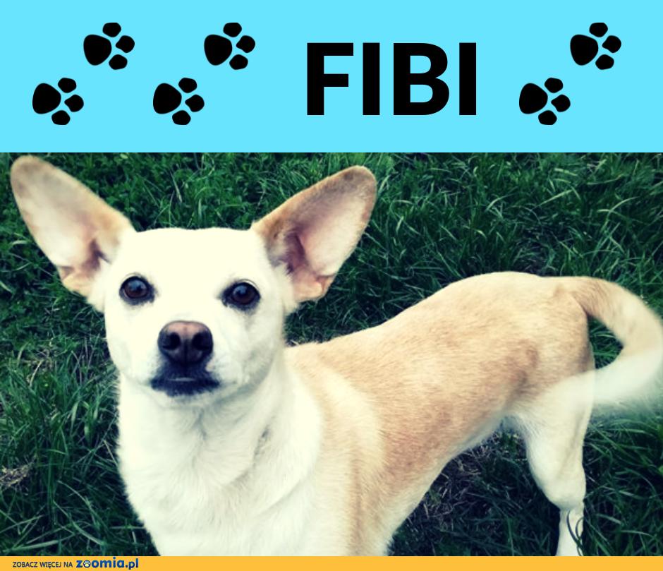 Fibi-przefajna, wesoła 5latka szuka domu
