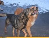 Fokus, pies ideał, proszę o dom, on cierpi w kojcu przechowalni
