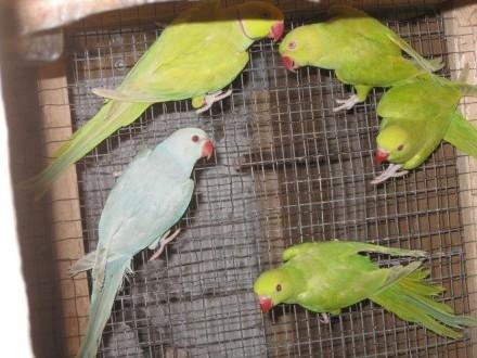 Papugi różne z 2019 r