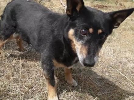 LEOŚ - kochany  zagubiony psiak  bez szans na dom? błaga o adopcję!   mazowieckie Warszawa