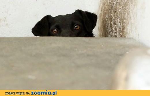 Tarzan, domowy psiak szuka kochającego domu!,  Kundelki cała Polska