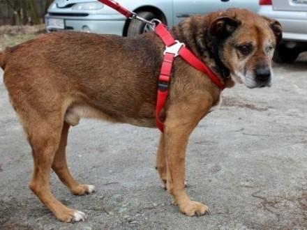 Kochany psiak AMOR szuka domu!   dolnośląskie Wrocław