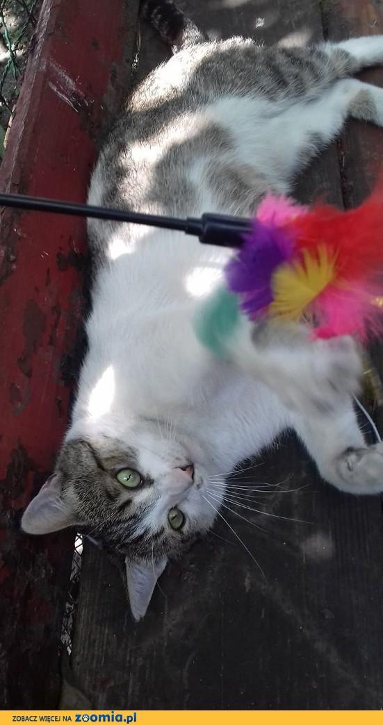 Matjasek - wspaniały kot szuka domu