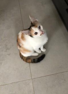 Piękne wesołe i rezolutne kotki czekają na wymarzone domki