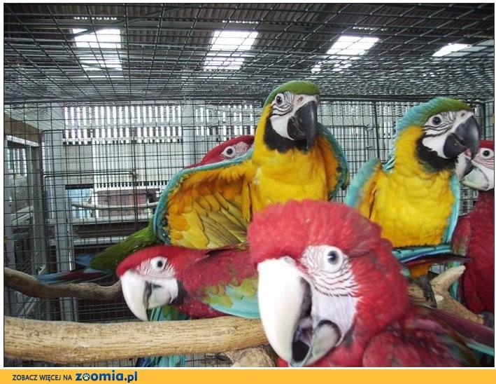 Papugi i jaja urodzajne
