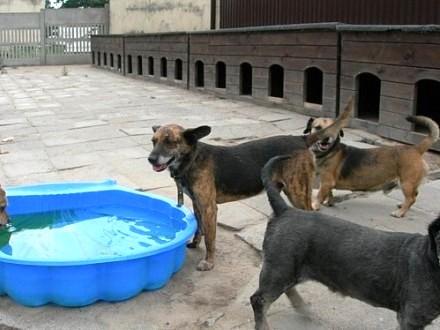 LIKAON średni pies pięknej maści- spokojny  łagodny  zrównoważony- szuka domu