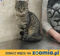 Młodziutki Gumi szuka domu!,  mazowieckie Warszawa
