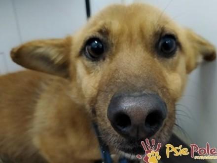 WODNIK-delikatny  miły niewielki psiak szuka domu  adopcja