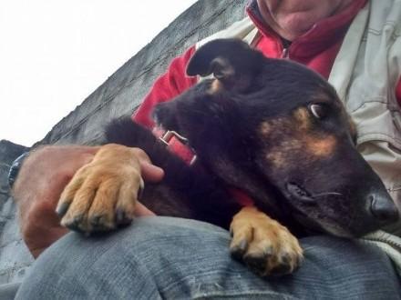 Młody Terry, pies do przytulania i kochania ADOPCJA