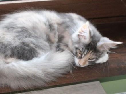 kotki UNCJA i UTOPIA - jedna piękniejsza od drugiej