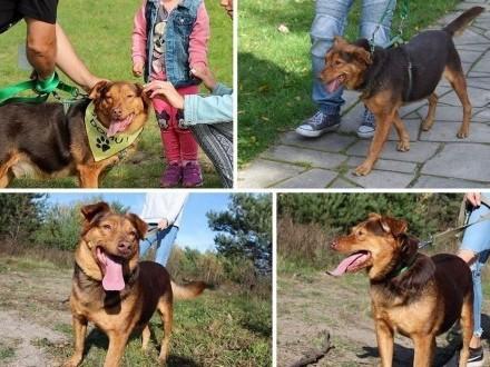 Rudy - super pies szuka domu