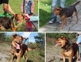 'Rudy - super pies szuka domu