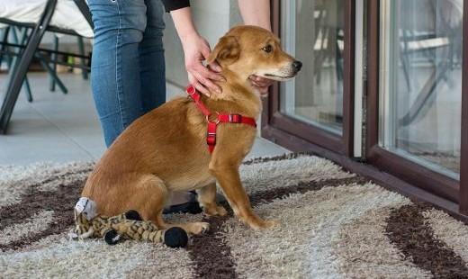 Nex - mały  radosny psiak - do adopcji   mazowieckie Warszawa