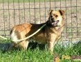 'BUBUŚ-piękny mały rudy psiak-potrzebuje spokojnego opiekuna i domu, adopcja