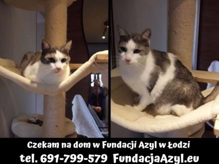 Kotek po śmierci właściciela potrzebuje nowego domu!   łódzkie Łódź