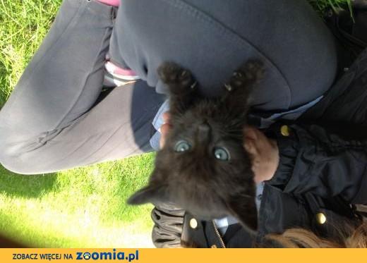 oddam koty ,  śląskie Częstochowa
