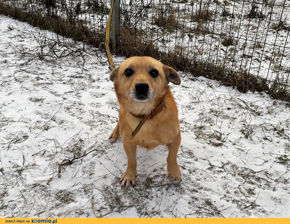 Epik - starszy piesek szuka domu i czeka na adopcję