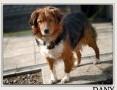 Kochany,najwierniejszy,średni 18 kg,szczepiony psiak DANY.Adopcja.