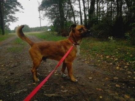 BIDON psi ideał kochający ludzi dzieci i świat szuka dobrego domku   Kundelki cała Polska