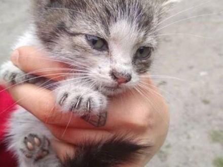 POMOCY! 3 malutkie kotki bez domu   małopolskie Kraków