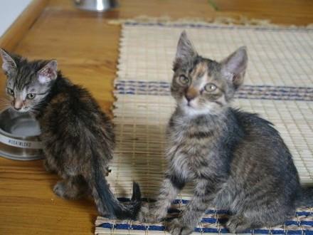 3 urocze ok 2 5 mies kocie siostrzyczki do pokochania !