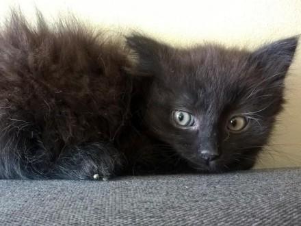 Mała koteczka Puszka szuka domu
