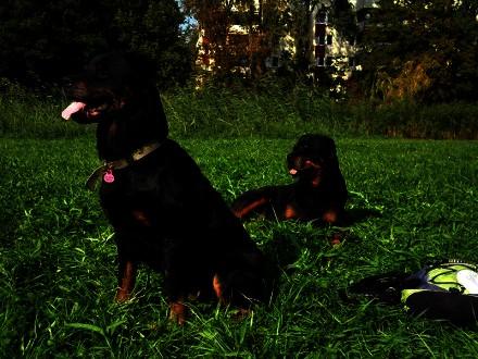 Iśka - przeurocza rottweilerka do adopcji