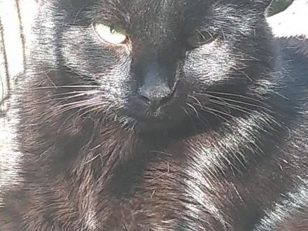 GROSZEK - kot szuka człowieka do pokochania!