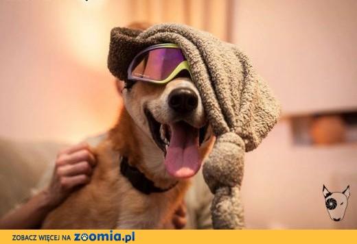 TOFFIK - bardzo fajny i radosny pies :) zabierz go do domu jeśli tylko chcesz !,  śląskie Katowice
