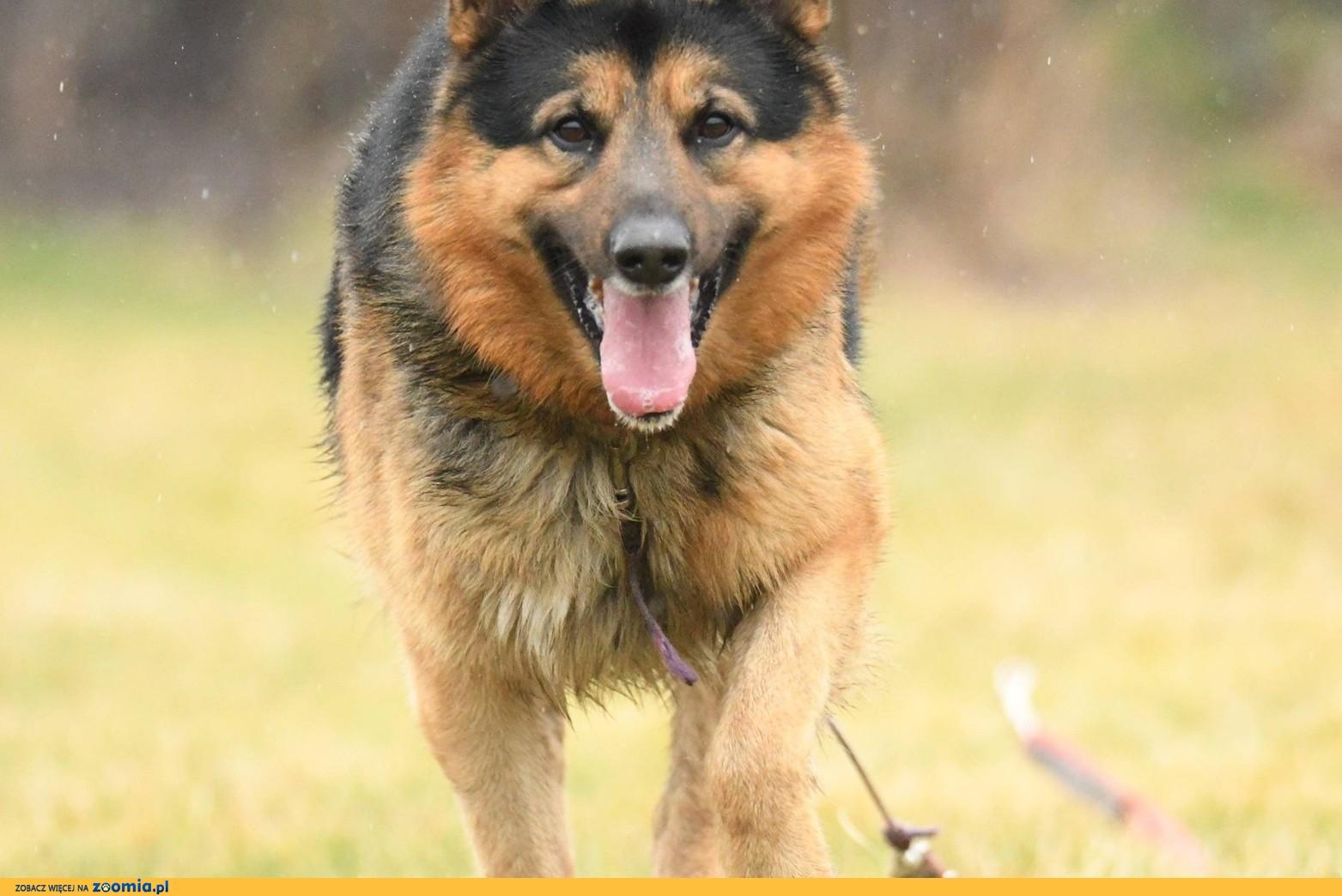 MAKS to pies piękny, zupełnie niecodzienny!