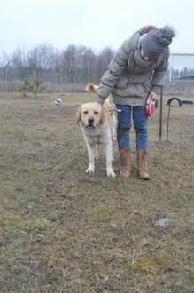Miłośnicy labradorów zapraszamy do adopcji!