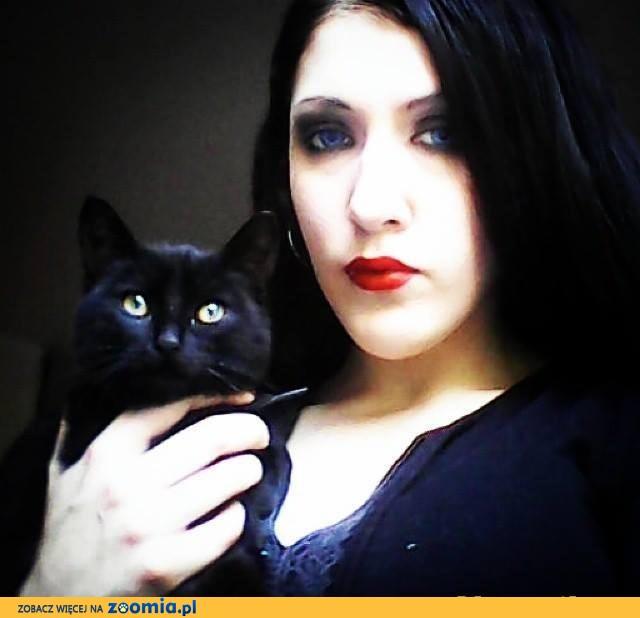 Czarna koteczka 4 miesięczna do adopcji