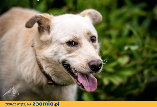 FENDER - łagodny, piękny, młody psiak - Twój przyjaciel wygląda tak!,  mazowieckie Warszawa