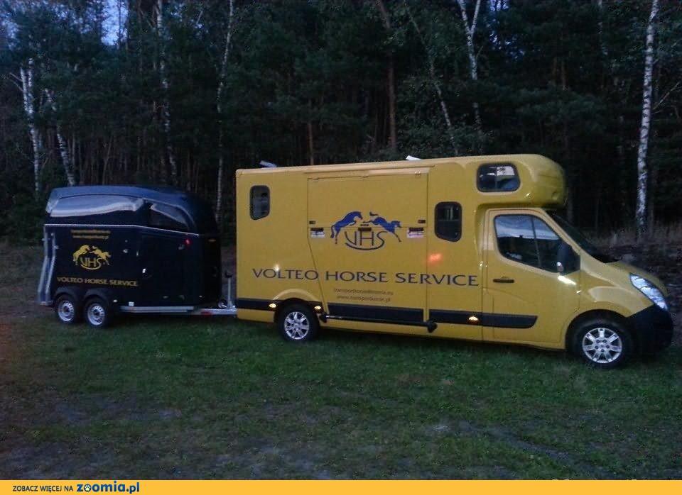 Transport koni: Polska - Niemcy - Holandia - Belgia