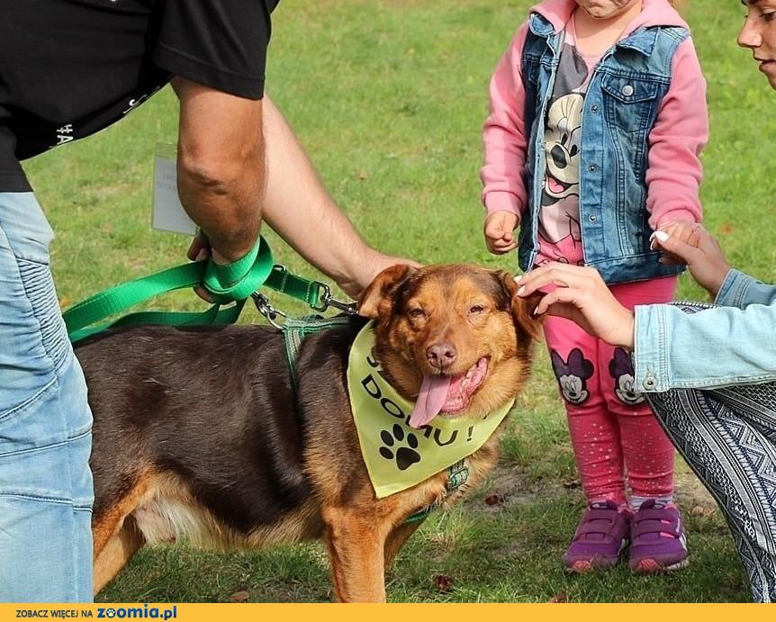 Rudy - mega sympatyczny pies,  małopolskie Kraków