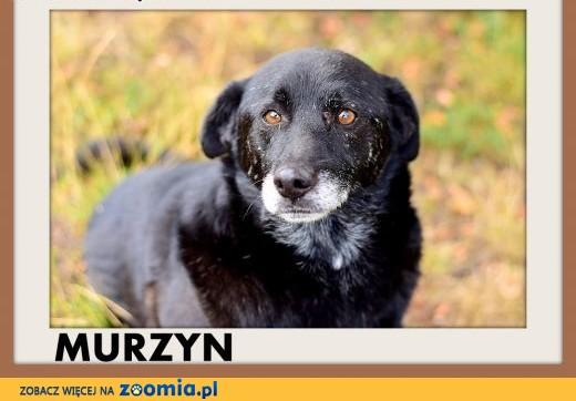 Porzucony w lesie,mały,łagodny,spokojny piesek MURZYN.Adopcja,  małopolskie Kraków