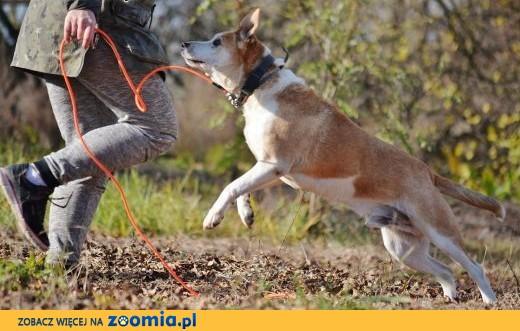 Edek-nieprzecietny pies szuka nieprzecietnego domu!,  mazowieckie Warszawa