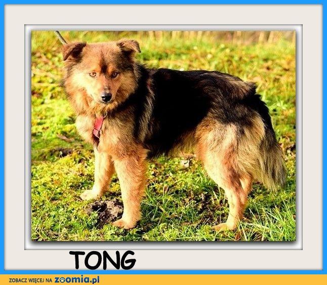 13 kg,energiczny,kochajacy zabawy, przyjacielski psiak TONG_Adopcja_