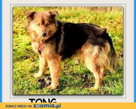 13 kg energiczny kochajacy zabawy  przyjacielski psiak TONG_Adopcja_