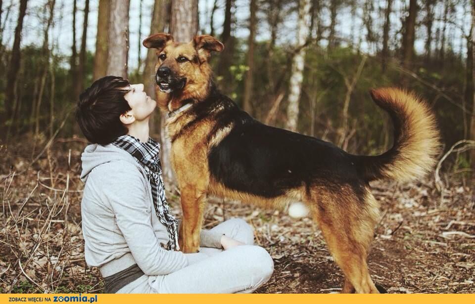 FADO - piękny pies po przejściach, szuka wyjątkowego domu...