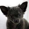 adopcja psa