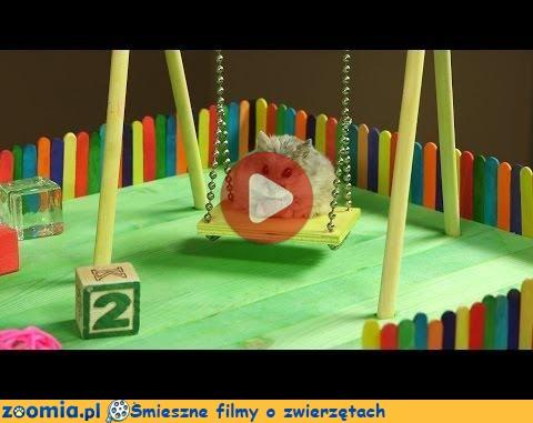 Super Plac zabaw dla chomiczka « Inne zwierzęta « Śmieszne filmy o IU79
