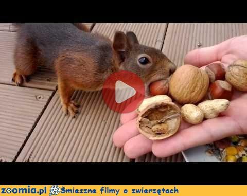 Deutsche Wildtier Stiftung  Eichhörnchen
